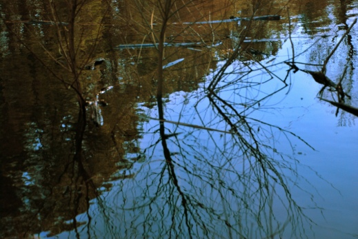 One of Chapel Hill's many ponds, at the Outdoor Education Center, Image by Flickr User Kat St Kat