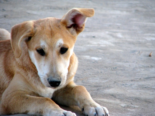 кастет звук который слышит только собака замислювалися коли-небудь