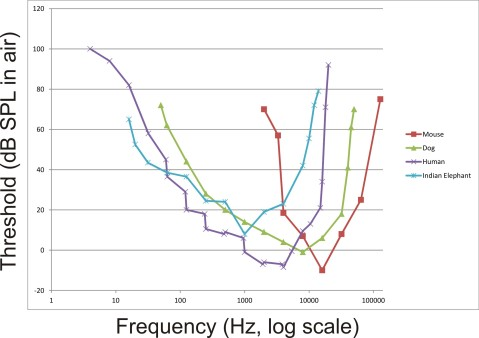 Audiograms (auditory sensitivity in air measured in dB SPL) by frequency of animals of different sizes showing the shift of maximum sensitivity to lower frequencies with increased size. Data replotted based on audiogram data by Sivian and White, 1933; ISO 1961; Heffner and Masterton, 1980; Heffner and Heffner, 1982; Heffner, 1983; Jackson et al, 1999.