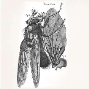 Illustration from Robert Hooke's Micrographia (1665)